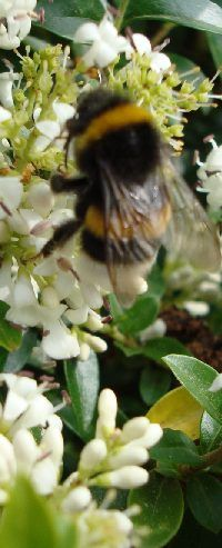 Health benefits of Manuka honey