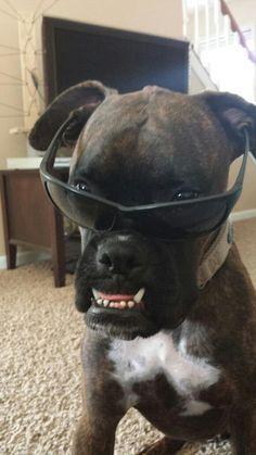 Boxer - look at that underbite ☻