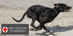 Why Teach Your Dog The Emergecy Call Command