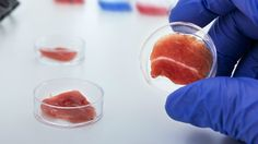 Adoption of lab-grown meat is not only ethical and rational, but becoming a very likely reality #food #science