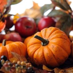 Fall Harvest, Autumn Fall, Lawn, Garden, Plants, Beautiful, Pumpkins, Pride, Iphone