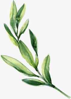 ألوان مائية، الإجازات يترك أخضر, ألوان مائية, ورقة الشجر, اوراق خضراء PNG Image and Clipart