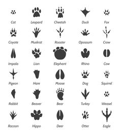 Animal tracks and bird footprints by vectortatu on @creativemarket Party Animals, Cute Animals, Simbols Tattoo, Kreative Jobs, Bird Footprint, Animal Footprints, Wild Kratts, Native American Symbols, Animal Tracks
