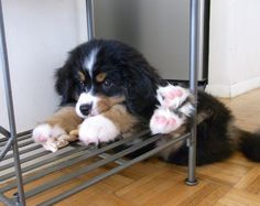 some days you sit on the shelf. other days, you're all paws.