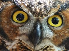 Owl Eyes by Michael--Fitzsimmons
