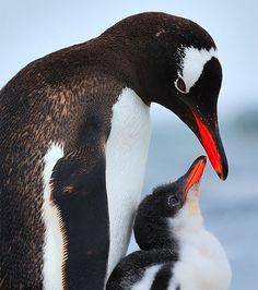 L'Instinct parental des Oiseaux (24)