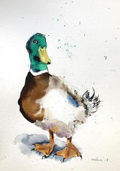 This is an Expressive & gestural ORIGINAL (one of a Kind) Pen and Ink drawing with watercolour of a mallard duck, drawn and painted in December 2017, using watercolour paper, Indian ink, dip pen and Schminke Artists quality watercolours. There is a liveliness to the drawing created
