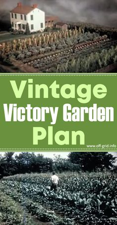 Vintage Victory Garden Plan - Off-Grid Do not allow the size of your possessions prevent Container Vegetables, Container Gardening, Organic Gardening, Gardening Tips, Food Insecurity, Bush Beans, Victory Garden, Garden Pictures, Off The Grid