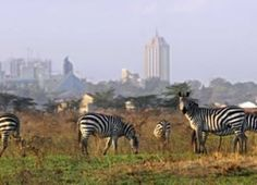 Our collection of affordable Kenya safaris packages are popular. We offer variety of Kenya only customized safari or Kenya and Tanzania combined safaris. Tanzania Safari, Mountain Climbing, Nairobi, African Safari, East Africa, Bird Watching, Kenya, National Parks, Scenery