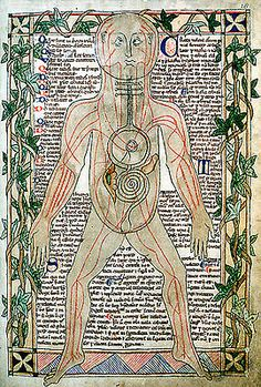 Medical miscellany, anatomical illustration showing the veins.  England; 13th century, late.  MS. Ashmole 399, fol. 18r.