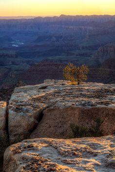 https://flic.kr/p/zbpwji | First Light | First Light Grandview Point  Grand Canyon National Park South Rim Arizona
