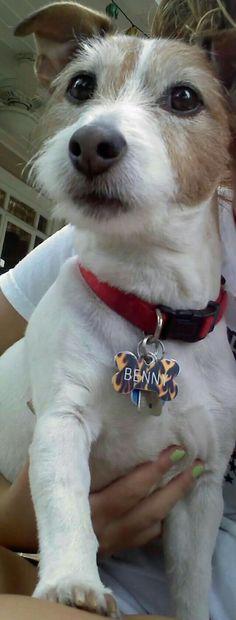 Benny the Dog