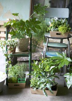 Du vert + des plantes + des paniers + suspendre/accrocher = l'univers des petites emplettes. Préparation pour de nouvelles prises de vue au château.