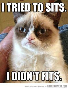 Why Grumpy Cat is grumpy…