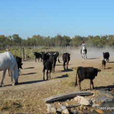 camargue france saintes-maries de la mer (13)