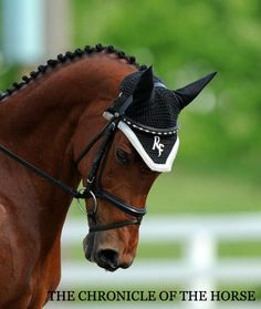 RF Amber Eyes sported a flashy browband and ear bonnet. Photo by Lindsay Berreth.