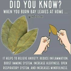 Do you burn bay leaves❓❓❓ Health Hacks! ➡️ IG 👉🏽 Do you burn bay leaves❓❓❓ Health Hacks! Burning Bay Leaves at home is healthy 😁 I love burning bay leaves. Bay leaves have anti-anxiety properties. Natural Health Remedies, Natural Cures, Natural Healing, Herbal Remedies, Natural Life, Holistic Healing, Natural Treatments, Natural Medicine, Herbal Medicine