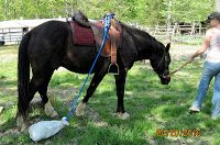 Horse Training - Obstacles/Desensitization