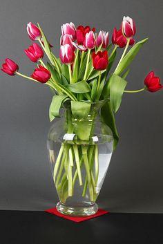 Vaso di tulipani | da Adriano_2