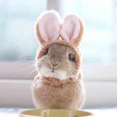 So cute bunny cute baby animals, animals and pets, funny animals, coe Cute Baby Bunnies, Funny Bunnies, Cute Funny Animals, Cute Baby Animals, Funny Cute, Animals And Pets, Bunny Bunny, Small Animals, Bunny Pics