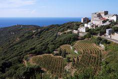 Route gourmande des vignobles Corse