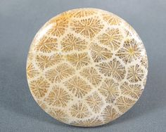 Indonesian Fossil Coral Designer Cabochon by azbluerockers on Etsy, $28.00