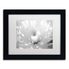 """Trademark Art Infrared Flower 2 Framed Photographic Print Matte Color: White, Size: 11"""" H x 14"""" W x 0.5"""" D"""
