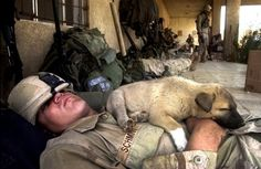 Animals help soldiers find affirmation of life during war - I