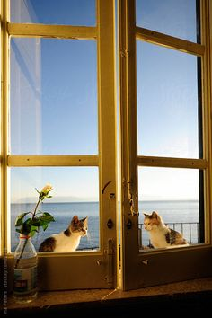Two cats sitting outside the window in nice evening light; the sea