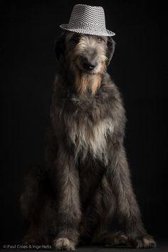 Irish Wolfhound - Tommy dei Mangialupi  by Paul Croes & Inge Nelis #animals #dogs #irishwolfhound #paulcroes
