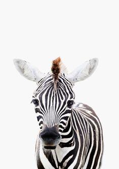 Zebra Art Print by Lotus Print Studio - X-Small Zebra Art, Cute Baby Animals, Jungle Animals, Baby Zebra, Baby Boy Rooms, Beautiful Horses, Animal Drawings, Sculpture Art, Photo Art