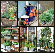 Many ideas for balcony gardens