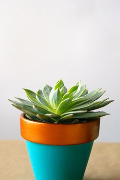 Copper-Dipped Planter DIY | http://jillianastasia.com/copper-dipped-planter-diy/