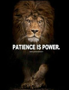this image shows patience because of the lion background. the lion shows patience because in order to eat they have to sit, stalk and wait. in other words, its a survival skill because they have to wait and if not they don't eat. Inspirational Good Morning Messages, Inspirational Quotes About Success, Motivational Quotes For Life, Success Quotes, Great Quotes, Positive Quotes, Super Quotes, Sensible Quotes, Unique Quotes