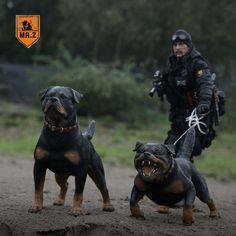 Look out! In fact just give up. A Rottweiler and a man holding back a demon of some sort. Military Working Dogs, Military Dogs, Big Dogs, Cute Dogs, Scary Dogs, Bulldog Breeds, Rottweiler Puppies, German Rottweiler, Beagle