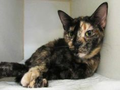 **TO BE DESTROYED 08/25/16** BEGINNER-rated PENELOPE is a 3-year-old beauty…