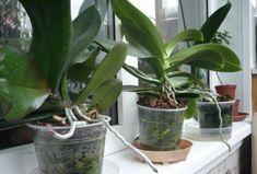 Ezzel a tápszerrel azokat a növényeket is életre keltheted, amelyekről már teljesen lemondtál – Filantropikum.com