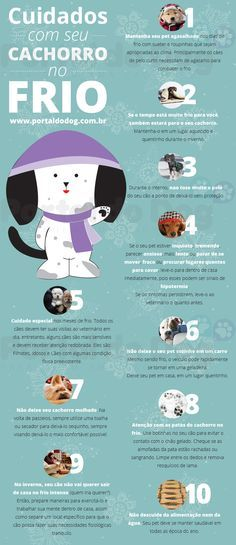 Infográfico: Portal do Dog