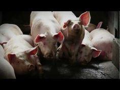 Final moments - stories from inside an Australian abattoir