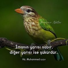 Muhammed Sav, Islam, Animals, Animales, Animaux, Animal, Animais