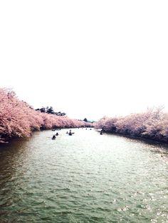 弘前公園-2014-