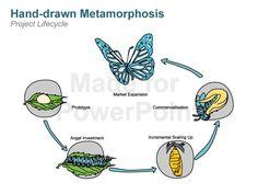 butterfly metamorphosis illustration - Google Search
