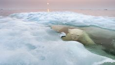 Photos Show An Arctic World That Won't Be Around For Long