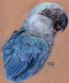 Losing Altitude - Spix's Macaw by KristynJanelle.deviantart.com on @deviantART