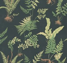 Ferns (839-T-2712) - Thibaut Wallpapers - A botanical style fern motif design - in fresh greens set on a deep black background. Wide width, Vinyl Coated. Please request sample for true colour match. Delivery for this American wallcovering is 7-10 working days.