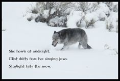 wolf wisdom - friendship, white, wisdom  beautiful, grey wolf, wild animal black, quotes, winter, majestic, howl, canine, arctic, wolves, wolf wallpaper, black, grey, canis lupus, wolfrunning, insnow, abstract, wolf pack, dog, howling, spirit, nature, solitude, timber, lobo, wallpaper, lone wolf, snow, mythical, wolf, the pack, pack