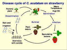 Nitrogen Cycle For Dummies