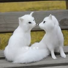 Image result for cute fox