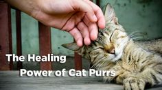 The #Healing #Power of #Cat #Purrs -