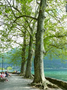 Lake Annecy, France Lake Annecy, Annecy France, My Photos, Plants, Castle, City, Viajes, Alps, Boats